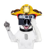Touristischer Hundephotograph lizenzfreie stockbilder
