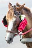 Touristischer Pferdewagen Stockfotos