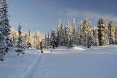 Touristischer Skifahrer auf Skispur Lizenzfreies Stockbild
