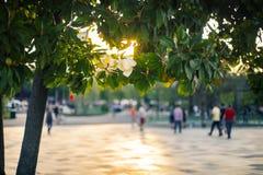 Touristischer Sommer in Tirana, Lizenzfreie Stockfotografie