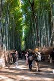 Touristisches Gehen in Bambuswald lizenzfreie stockfotos