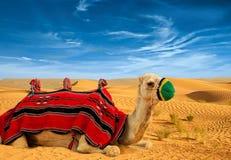 Touristisches Kamel lizenzfreie stockfotografie