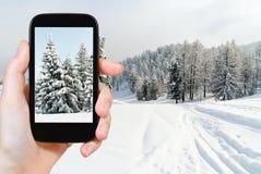 Touristisches nehmendes Foto von eingeschneiten Tannenbäumen Stockbild