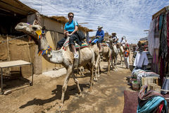 Tourists aboard camels in the Nubian village of Garb-Sohel in the Aswan region of Egypt. Royalty Free Stock Photos