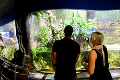Tourists at Aquarium - Barcelona, Spain Stock Photo