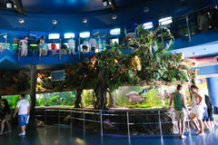 Tourists at Aquarium - Barcelona, Spain. Aug. 19 2014, Tourists watches Fishes and enjoy in Aquarium in Port of Barcelona, Spain Royalty Free Stock Photos