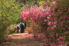 Tourists Azalea Garden Pathway Washington DC Stock Photos