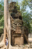 Tourists at banyan tree, Angkor Royalty Free Stock Images