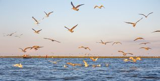 A boat through the Danube delta. Stock Images