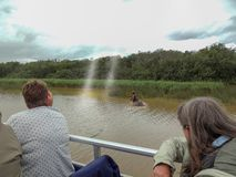 Tourists on a boat watching a hippo royalty free stock images