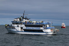 Tourists on a Boat at Whale Watching in Reykjavik. Iceland royalty free stock photo