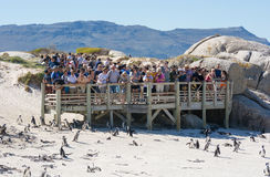 Tourists at Boulders penguin colony, Simonstown Royalty Free Stock Image