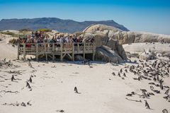 Tourists at Boulders penquin colony, Simonstown Royalty Free Stock Photos