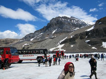 Tourists buses and tourists at Snow Dome Glacier, Canada Stock Images