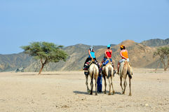Tourists on camel. For desert tour Stock Photos