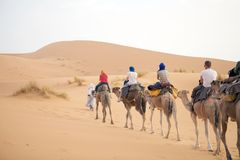 Tourists on the camel Royalty Free Stock Photography