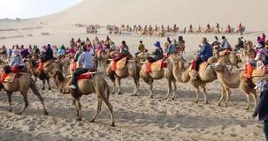 Tourists in camel caravan, Dunhuang, China