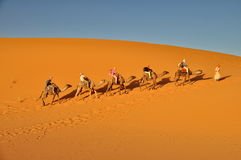 Tourists in a Camel caravan in Mer Stock Image
