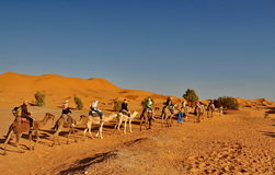 Tourists in a Camel caravan Royalty Free Stock Images