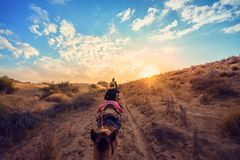 The tourists on the camel in the desert in Jaisalmer, Rajasthan, India royalty free stock photo
