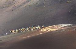Tourists on a camel safari Royalty Free Stock Photos