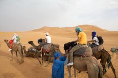 Tourists on the camels Stock Photo