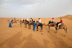 Tourists on the camels Royalty Free Stock Images