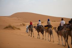 Tourists on the camels Stock Images