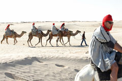 Tourists with camels Stock Image