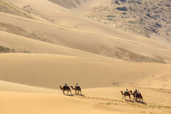 Tourists on camels in the dunes of the Gobi Desert, Mongolia Stock Photos