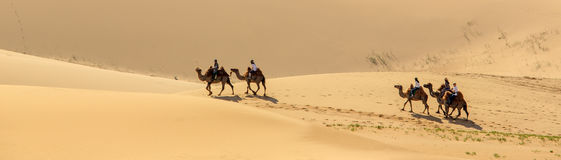 Tourists on camels in the dunes of the Gobi Desert, Mongolia Stock Image