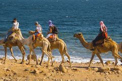 Tourists on camels in Egypt royalty free stock photography