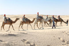 Tourists on camels in line Stock Photos