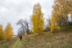 Tourists in the campaign. Tourists walking on the road along the river among the bright yellow of the birches Royalty Free Stock Images