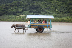 Tourists on Cart Pulled by Water Buffalo, Japan Royalty Free Stock Photography