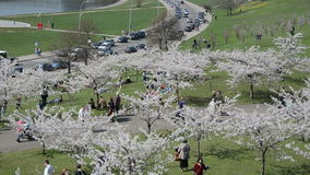 Tourists and citizens people enjoy leisure in spring cityspace stock footage