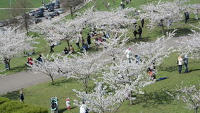 Tourists and citizens people recreate in spring city park stock footage