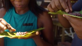 Tourists Eating Organic Cocoa Paste By Hand On A Leaf In Ecuador. Detail Shot Of Tourists Eating Organic Cocoa Paste By Hand On A Leaf In Ecuador stock video footage