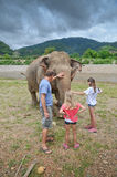 Tourists with elephant Royalty Free Stock Photos
