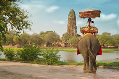 Tourists on an elephant ride tour Stock Image