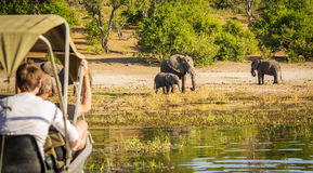 Tourists On Elephant Safari Africa. Tourists watching an elephant while on safari in Botswana, Africa Royalty Free Stock Images
