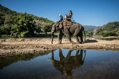 Tourists on elephant trekking in an elephant camp. In province CHIANGRAI,NORTHERN THAILAND Royalty Free Stock Images
