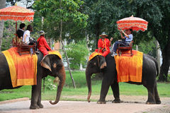 Tourists on elephants in Ayutthaya Royalty Free Stock Photo