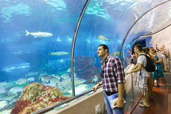 Tourists enjoy Aquarium - Barcelona, Spain Royalty Free Stock Image