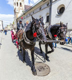 Tourists enjoy a carriage ride at the Market Square in Krakow Royalty Free Stock Images