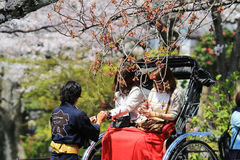 Tourists enjoy cherry blossom at Path of Philosophy in Kyoto Stock Photography