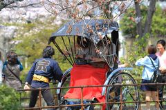 Tourists enjoy cherry blossom at Path of Philosophy in Kyoto Stock Photo
