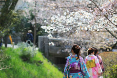 Tourists enjoy cherry blossom at Path of Philosophy in Kyoto Stock Image