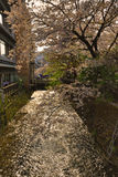 Tourists enjoy cherry blossom at Path of Philosophy in Kyoto Royalty Free Stock Images