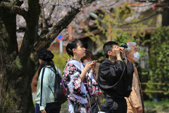 Tourists enjoy cherry blossom at Path of Philosophy in Kyoto Stock Photos